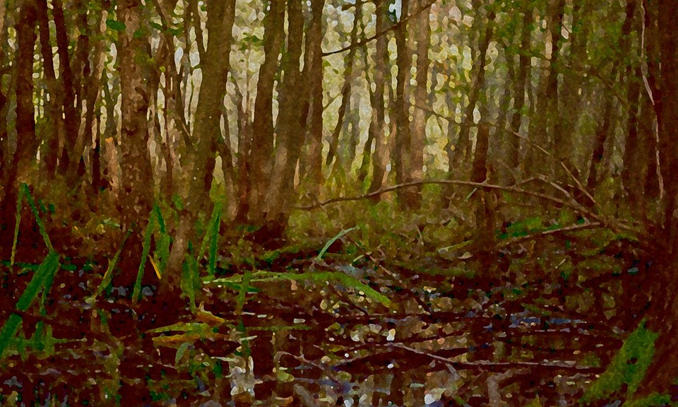 Image of Swamp